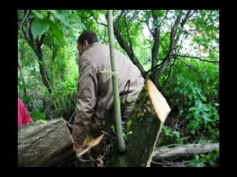 Рубка, вырубка деревьев?- вам сюда! услуги, цены, консультации.