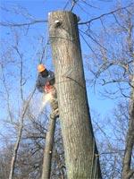Рубка деревьев: стоимость