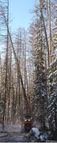 Валка леса. рубка леса. рубка просек. машины для валки леса. забт.