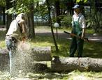 Удаление деревьев: удаление валка спил вырубка рубка кронирование деревьев аварийных сложных опасных деревьев частями валкой москва область