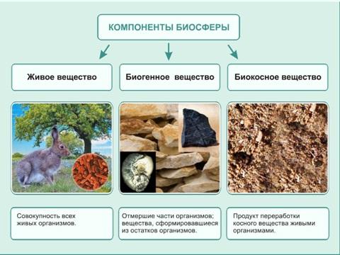 Биомасса - презентация по общей биологии