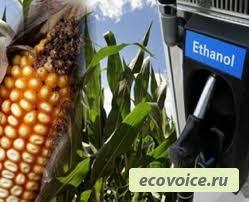Биомасса нам поможет / возобновляемая энергия / ecovoice - социально-информационный портал