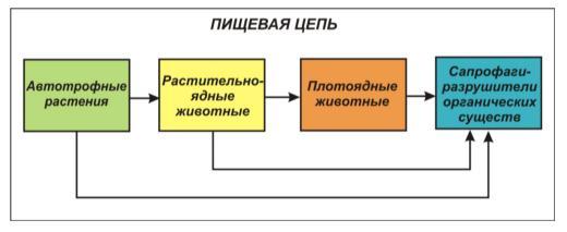 Биомасса. поток энергии и цепи питания. экологическая пирамида.