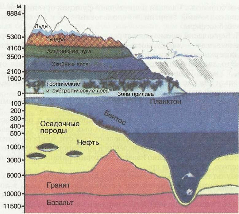 Биосфера и свойства биомассы планеты земля » электронный учебник по биологии