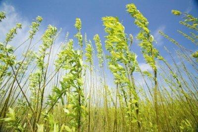 Использование биомассы растений. продуктивность биомассы растений.
