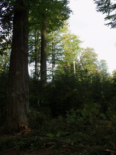 Использование древесной биомассы - энергобаланс