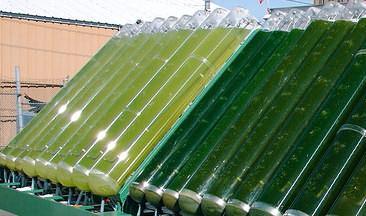 Производство белков из биомассы