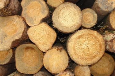 Древесина и древесные отходы - древесина - экоэнергия
