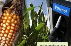 Биомасса нам поможет / возобновляемая энергия / ecovoice — социально-информационный портал