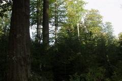 Использование древесной биомассы — энергобаланс