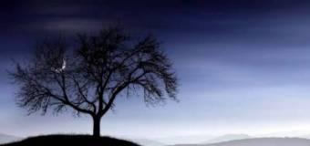 Дерево — д — энциклопедия лесного хозяйства — статьи — woodyman