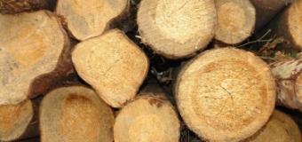 Древесина и древесные отходы — древесина — экоэнергия